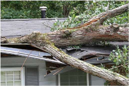 3 Ways Trees Can Damage A Roof